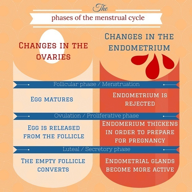 3 phases of ovulation
