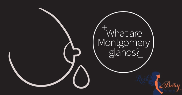 montgomery glands